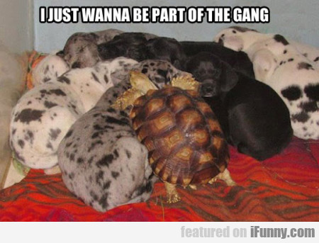 I just wanna be part of the gang