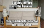 Couple Therapy With The Purrkins