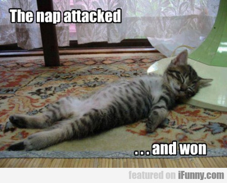 The Nap Attacked! And Won