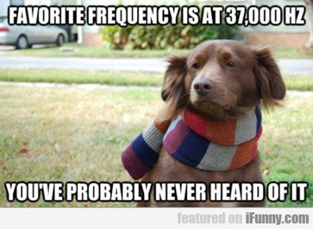 Favorite Frequency Is At 37,000 Hz