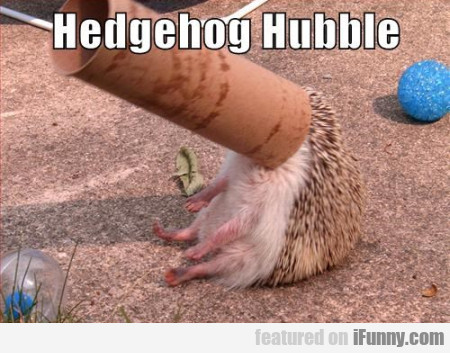 Hedgehog Hubble