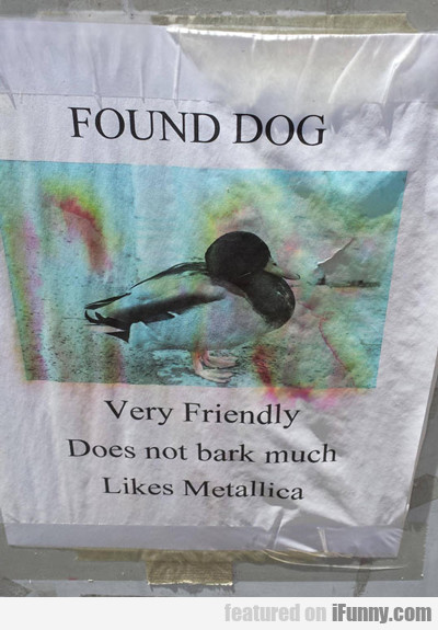 Found Dog, Very Friendly, Does Not Bark Much...