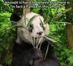 I Know It's Hard To Believe, But There's A Panda..