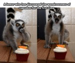 A Lemur Who Has Discovered...