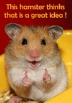 This Hamster Thinks That It Is A Great Idea!