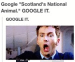 "Google ""scotland's National Animal"""
