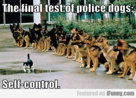 The Final Test Of Police-dogs. Self Control.