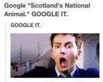 Google Scotland's National Animal...
