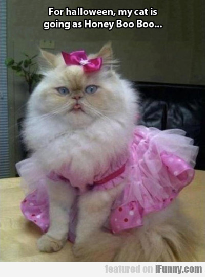 For Halloween, My Cat Is Going As Honey Boo Boo