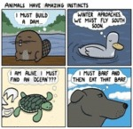 Animals Have Amazing Instincts