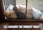 All Aboard The Snooze Train