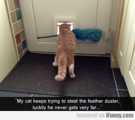 My Cat Keeps Trying To Steal The Feather Duster