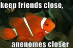 Keep Friends Close, Anemones Closer
