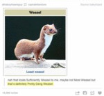 Nah, That Looks Sufficiently Weasel To Me