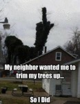 My Neighbor Wanted Me To Trim My Trees Up...