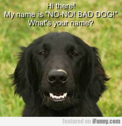 "Hi There! My Name Is ""no-no! Bad Dog!"""