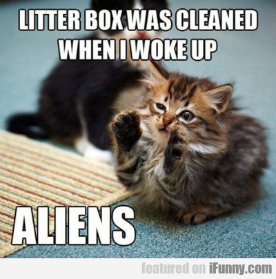 Litter Box Was Cleaned When I Woke Up..