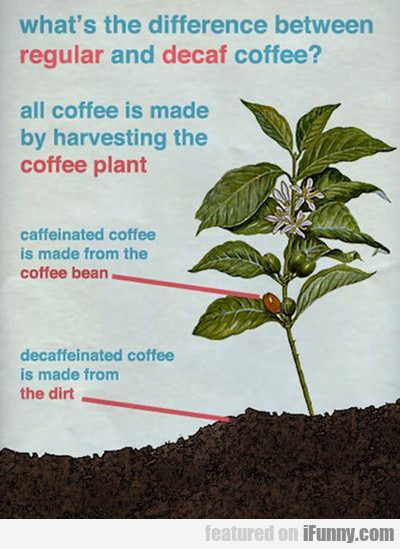 What's The Difference Between Regular And Decaf?