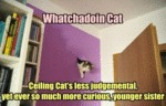 Watchadoin Cat - Ceiling Cat's Less Judgemental..