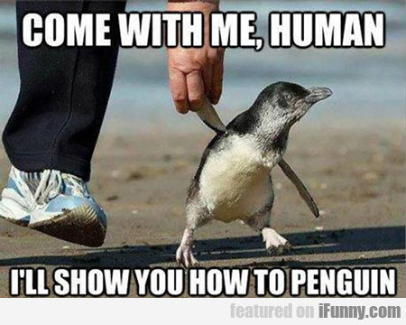 Come With Me Human, I'll Show You How To Penguin