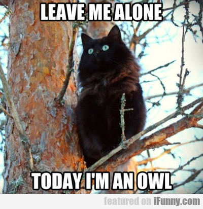 Leave Me Alone. Today I'm An Owl.