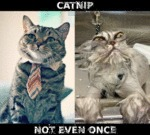 Catnip, Not Even Once