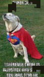 Super Dog. Wherever There Is Injustice And Shade..