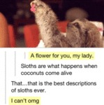 A Flower For You, My Lady. Sloths Are What...