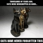 Thousands Of Years Ago, Cats Were Worshipped...