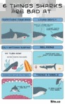 6 Things Sharks Are Bad At