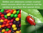 Skittles And Jellybeans Contain Crushed...