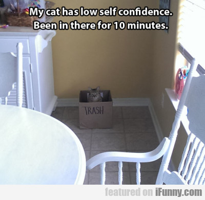 My Cat Has Low Self Confidence. Been In There...