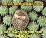 On Your Trip Through The Desert Don't Let Your...