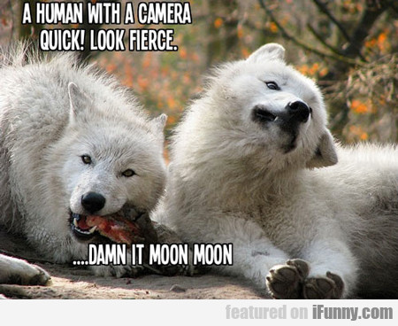 A Human With A Camera, Quick, Look Fierce...