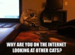 Why Are You On The Internet Looking At Other Cats?