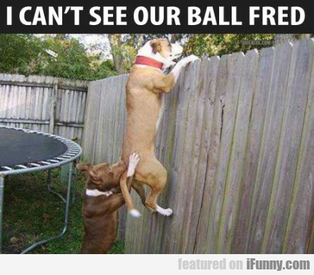 I Can't See Our Ball Fred