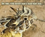 Oh, Like You Never Had A Bad Hair Day...