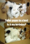 Toilet Paper In A Box! It's My Birthday?