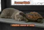 I'n Sorry Kitteh. I Diddint Meen To Snap