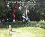 Trimming The Hedges Like A Boss
