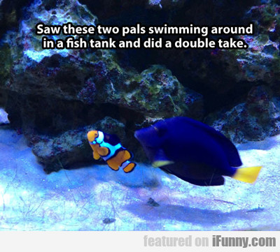 Saw These Two Pals Swimming Around In A Fish...