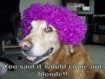 You Said It Would Come Out Blonde!!