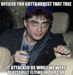 Officer, You Gotta Arrest That Tree...