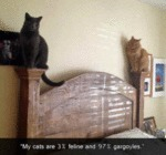 My Cats Are 3% Feline And 97% Gargoyles