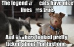 The Legend That Cats Have Nine Lives Was True.
