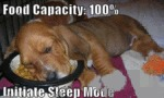 Food Capacity: 100%. Initiate Sleep Mode