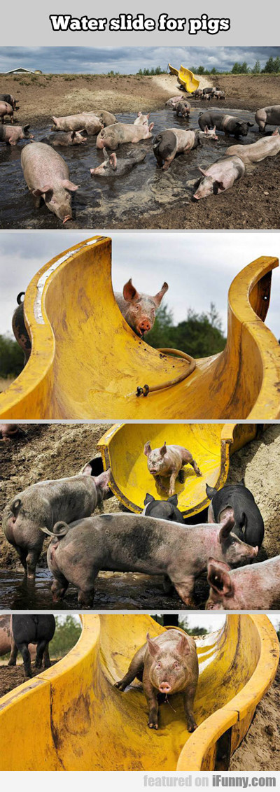 Water Slide For Pigs