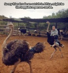 So My Friend Rode An Ostrich In Africa...