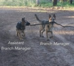 Assistant Branch Manager And Branch Manager