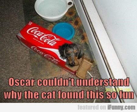 Oscar Couldn't Understand Why The Cat Found This..